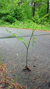 photo of a sapling growing up through a crack in the asphalt